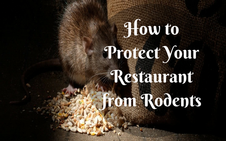 How to Protect Your Restaurant from Rodents
