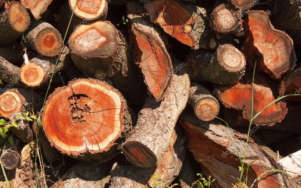 Is All Firewood a Renewable Energy?
