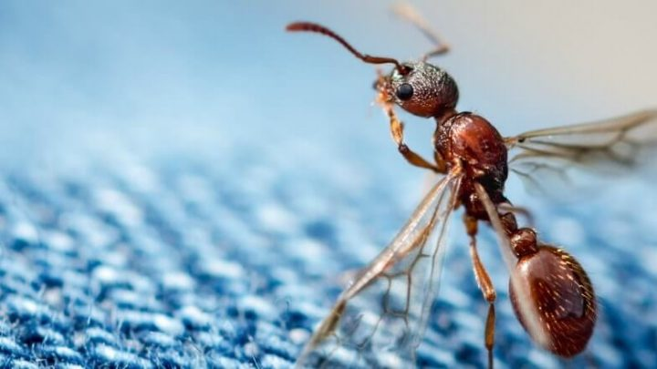Tips for keeping ants away from your desk