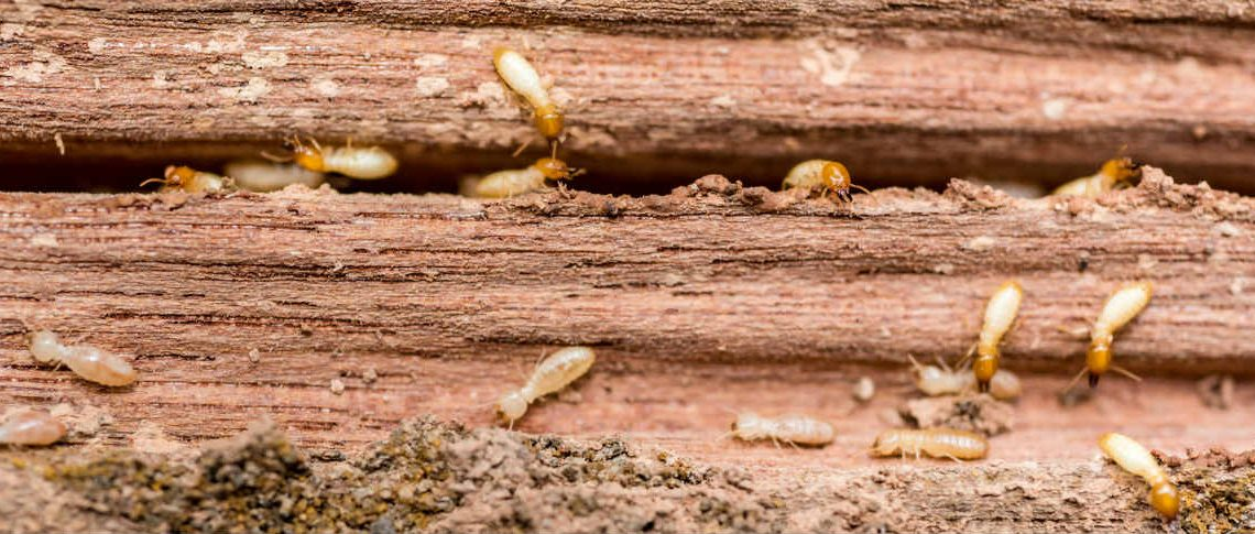 What Attracts Termites into Your House