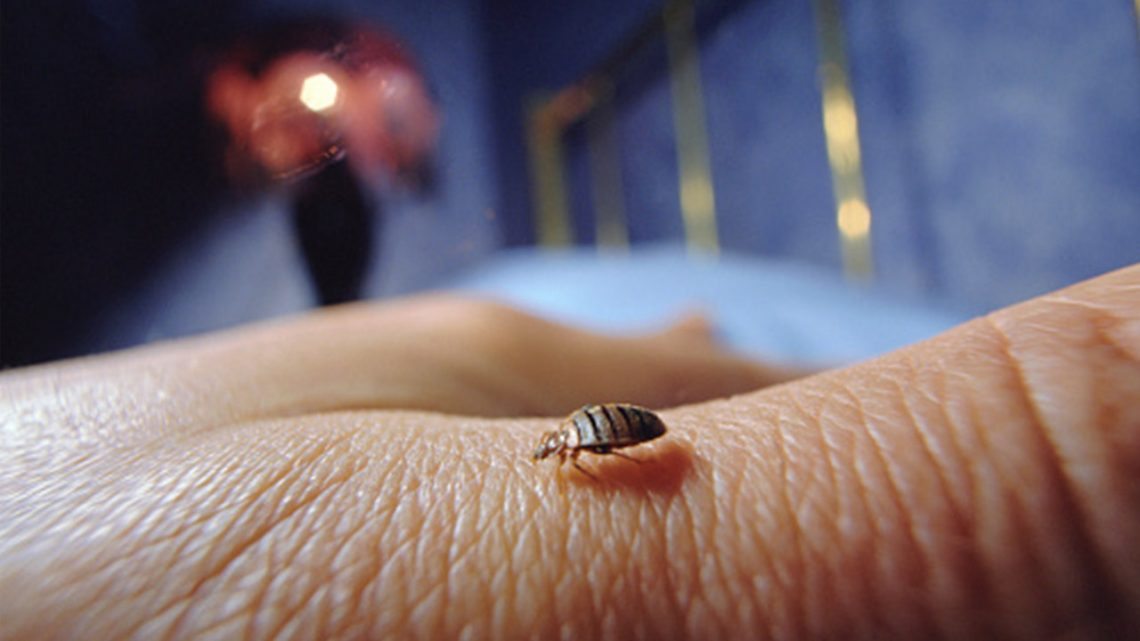 Everything you need to know about bedbugs